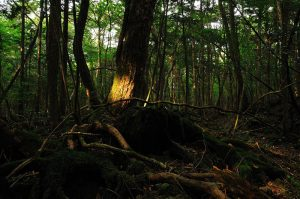 1024px-Aokigahara_forest_01