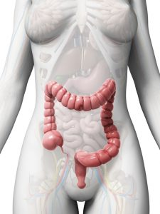 18451396 - 3d rendered illustration of the large intestine