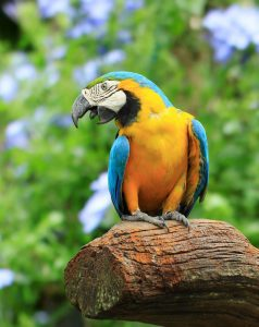 10813999 - parrot, on background as colorful flowers